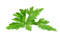 Featured Leaf Image